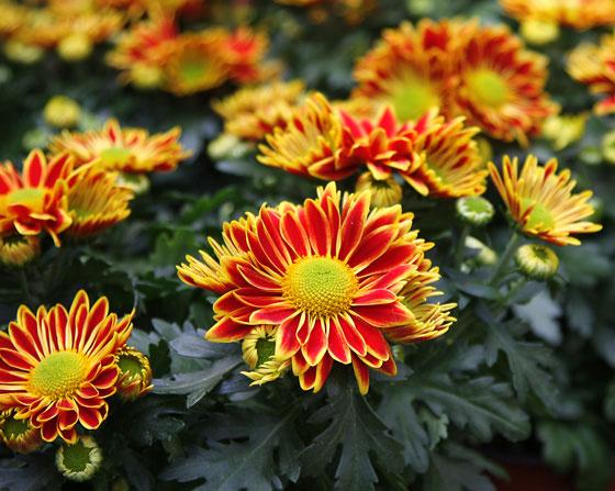 Flores y plantas de otoño