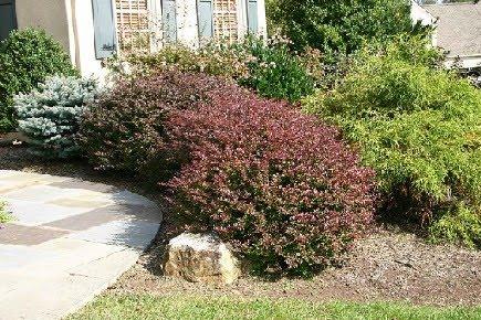 Plantar arbustos
